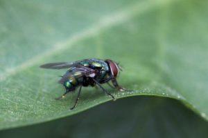 fliegengitter insektenschutzgewebe