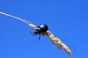 insektenschutzsysteme